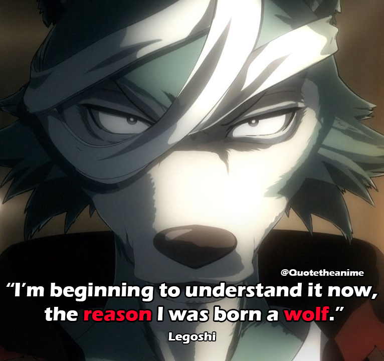 "Beastars Quotes, Legoshi Quotes, ""I'm beginning to understand it now, the reason I was born a wolf."""
